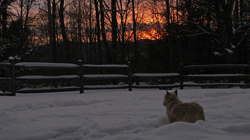 vermont winter nature outdoors animals dogs cairnterriers pets