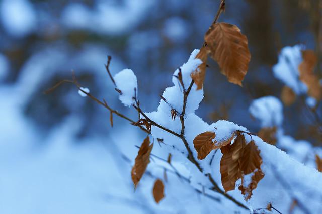 Unter sanfter Schneedecke