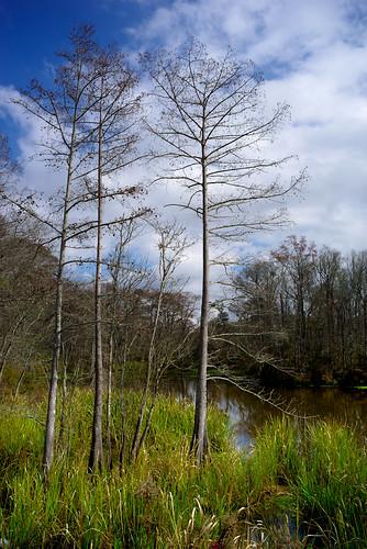 dailyindecember2017 swamp trees pentaxkseries28mmf35 landscape covington louisiana unitedstates us