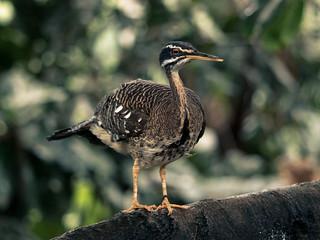 National Aviary | by trevorrichardsmusic