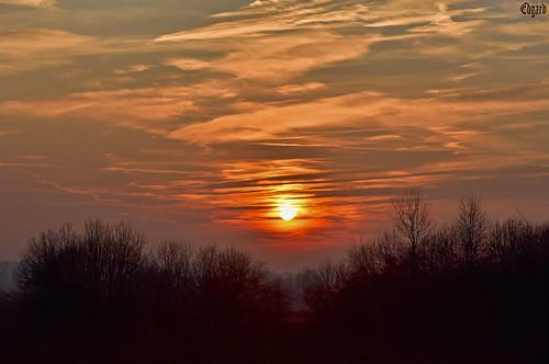 sunset sun sky clouds bush plants nature