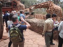 Giraffe Interaction 1