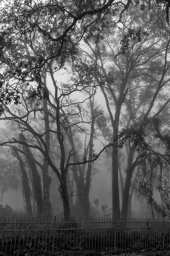fog morning new port richey florida monochrome black white hdr