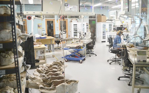Demonstration paleontology lab 0938 | by Tangled Bank