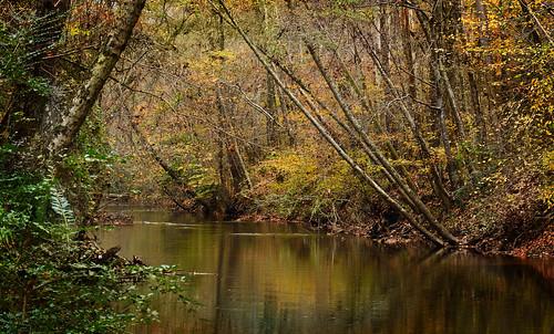 nature river autumn water trees carollton georgia outdoors landscape littletallapoosapark