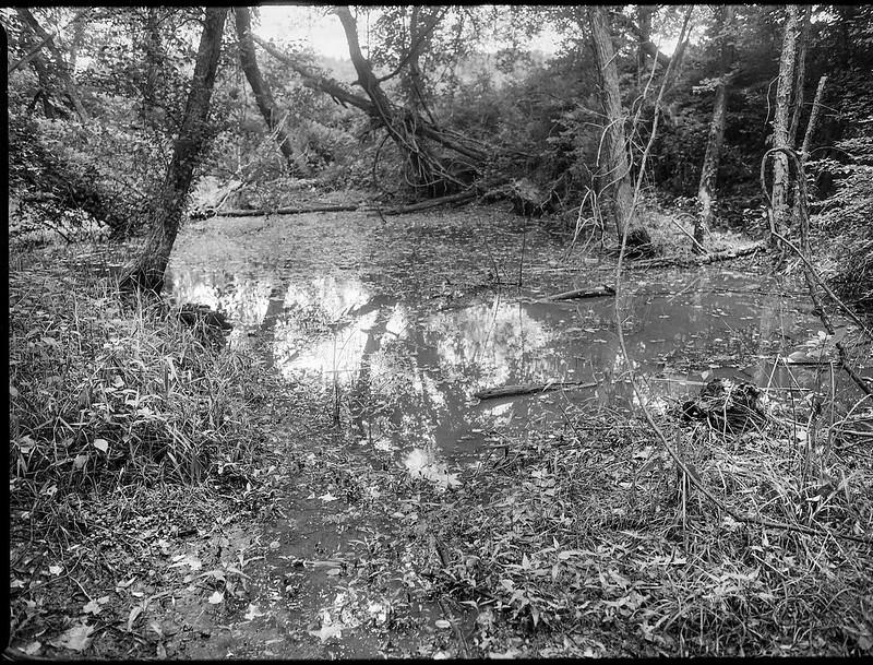 wetlands, water, trees, reflections, Warren Wilson College, Black Mountain, North Carolina, Mamiya 645 Pro, mamiya sekof 80mm f-2.8, late spring 2017