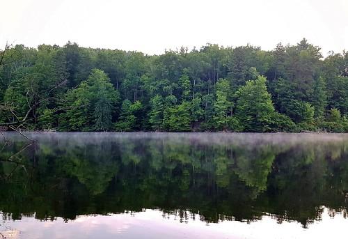 lake water mistymorning trees lakeshore