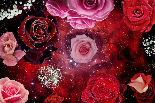 Rose Galaxy