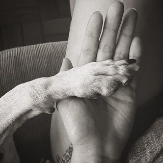 Holding paws