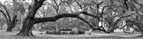 citypark neworleans louisiana la usa panorama oak explore