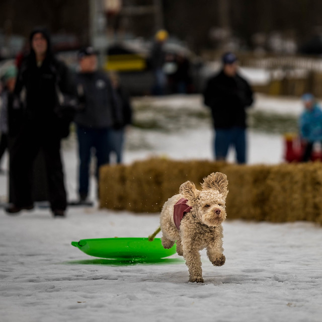 Sled Dog Racing