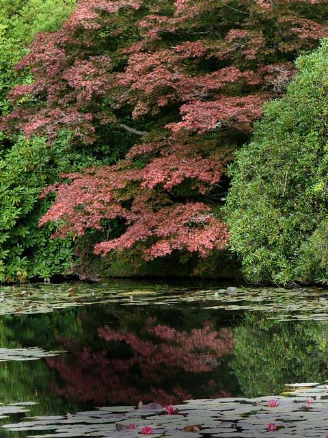 National Trust - Sheffield Park, East Sussex Aug 2012 (44)