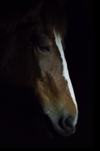 Horse Head in Profile | by justenoughfocus