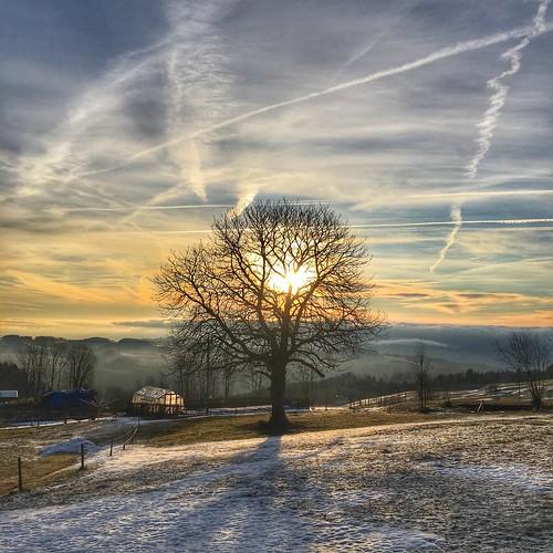 light tree morning mood sun sunlight sunrise austria europe flickr shadow cold sky clouds landscape nature beautiful winter