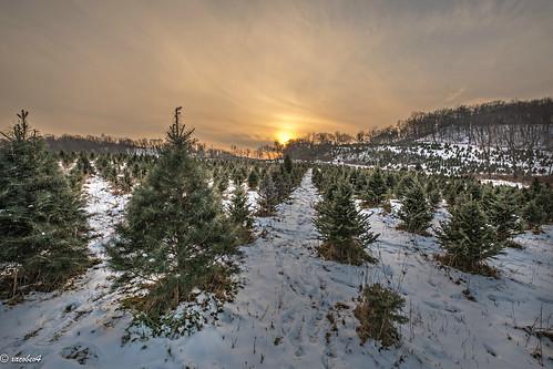 joseph cutting tree christmas 2017