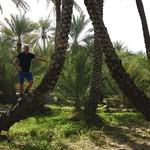 In Al Ain Oasis