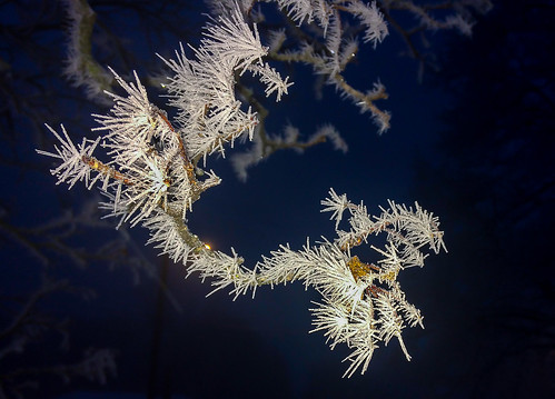 frost hoarfrost winter ice iphone nature beauty cold tree maple landscape knarrgallery darylknarr knarrphotography