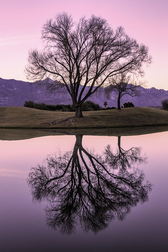 reflection tree willow sunrise