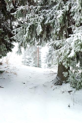 dogwood2017 nikon d600 sigma 70200mm f28 winter snow forest track tracks animal nature woods frozen cold dof depthoffield bokeh suomi finland jyväskylä jyvaskyla tree green outdoors outside wideopen ice view blur