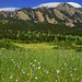 Bear Peak With Blue Flax flowers - City of Boulder Open Space and Mountain Parks