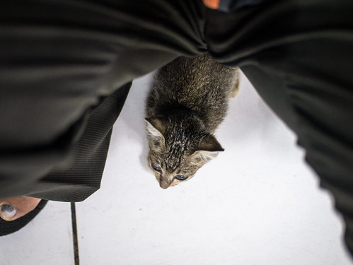 Stray CAT | by Henry Sudarman