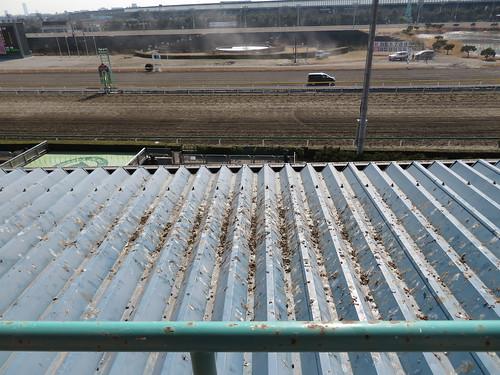 船橋競馬場のスタンド4階のハトの糞