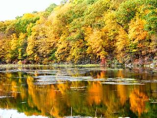 Orange Fall Reflection