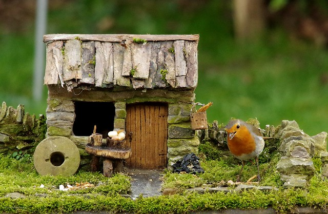 Robin with small cottage  (1)