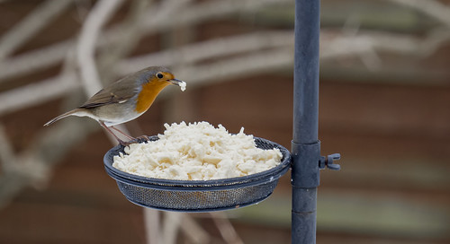 This Robin Likes Cheese | by jonskids