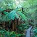 Tree ferns and boardwalks