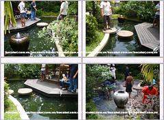 Thiết kế, thi công bể cá, hồ cá chép Koi chuyên nghiệp