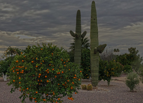 arizona sunset winter sky cloud outdoor dusk serene field landscape bright skyline tree grass sun city west colorful color tonight monsoon weather clouds summer fall silhouette colros sunshower shower backyard nikon cactus