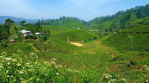 byrailtonuwaraeliya srilanka ceylontea teaplantations