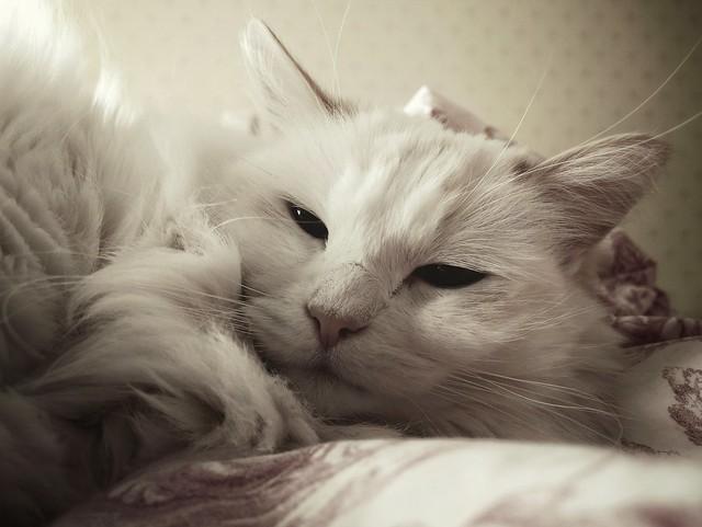 Cuddly