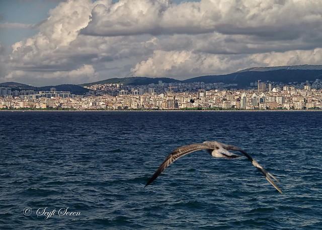 İstanbul deyince aklıma martı gelir...