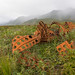 Aleutian Islands World War II National Monument - Alaska Maritime National Wildlife Refuge