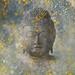 Buddhas Vision