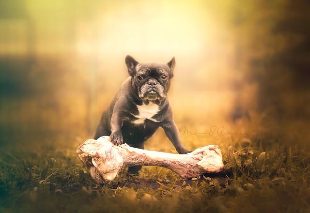 Éste hueso es mio!!!  -- This bone is my treasure!!!