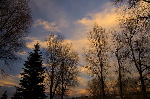 sunset treesilhouettes