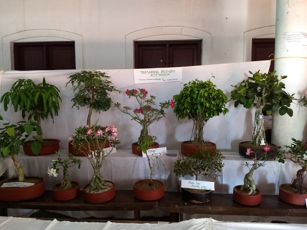A pic from our Bonsai exhibition at Baselius College, Kottayam -