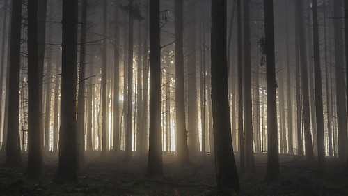 woods wald nebel fog mist misty trees tree baum bäume licht sonne sonnenaufgang sunrise cinematic alien aliens nature explore