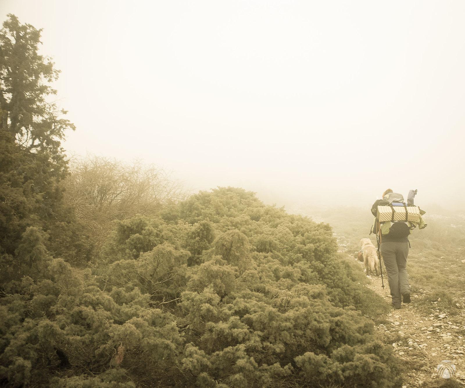 La niebla da un toque fantasmal a los enebros y las sabinas