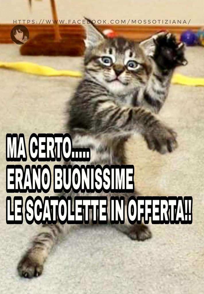 Link Divertenti Cat Tiziana Mosso Food Love Animal