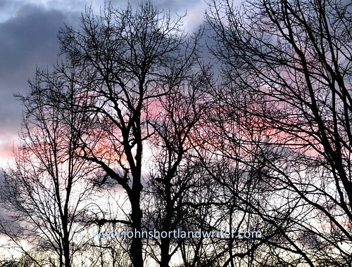 trees clouds sunset black sky branches twigs pink grey winter