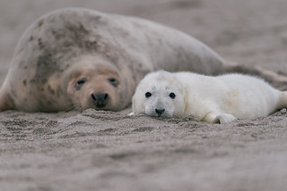 Relaxing baby with mum | by knipslog.de