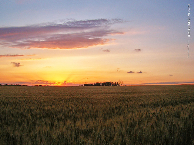Wheatfield at sunset, 27 May 2017