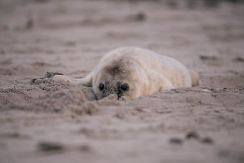 Discover the beach sand | by knipslog.de