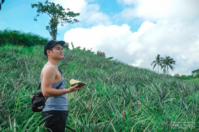 Pineapple Farm, Tagaytay City