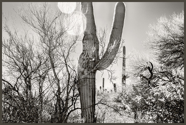 Sabino Canyon IR #28 2018; There's a Hole in My Cactus