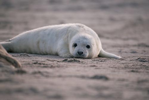 Pleased seal | by knipslog.de